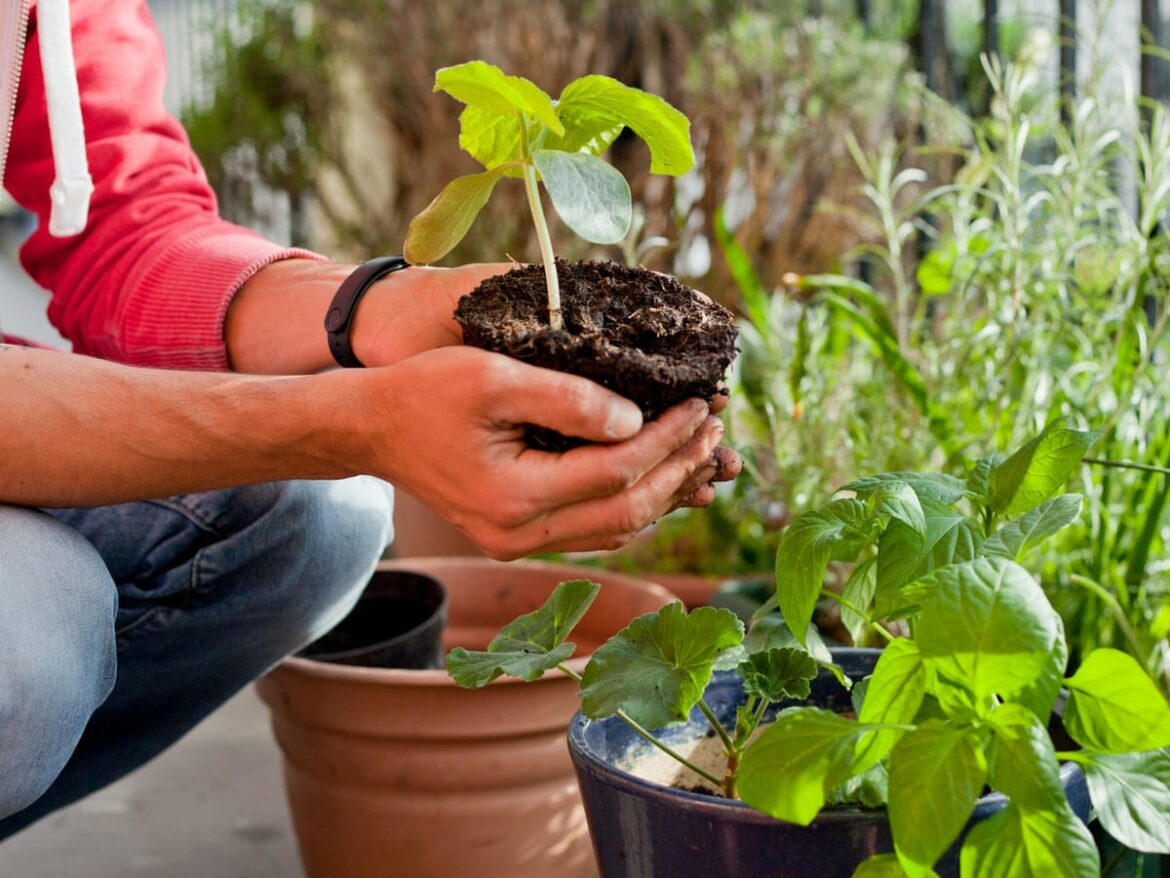 Garden The Organic Way With These Great Tips!